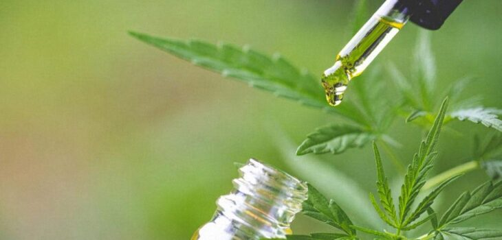 Excellent benefits of weed that everyone needs to know