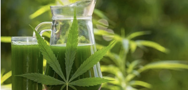 JUICING RAW MARIJUANA A HEALTHY ALTERNATIVE TO SMOKING