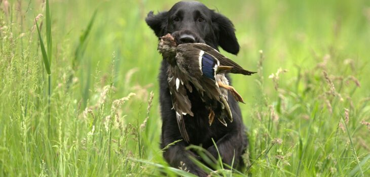 4 of the Best Animals to Hunt for Food