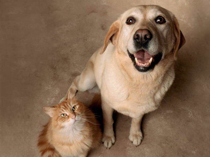 Get licensed vet care for your pets instantly
