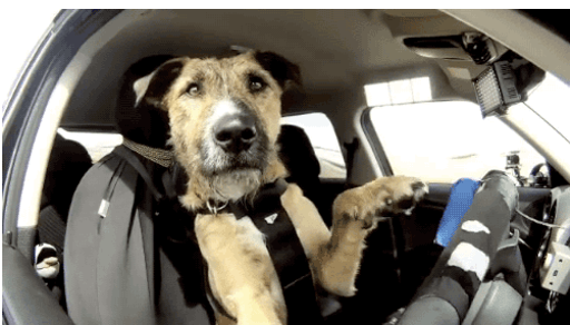 Top Tips to Keep Your Dog Safe and Comfortable in the Car
