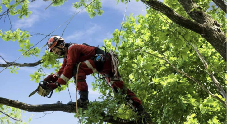 When Is It Time for Tree Removal?